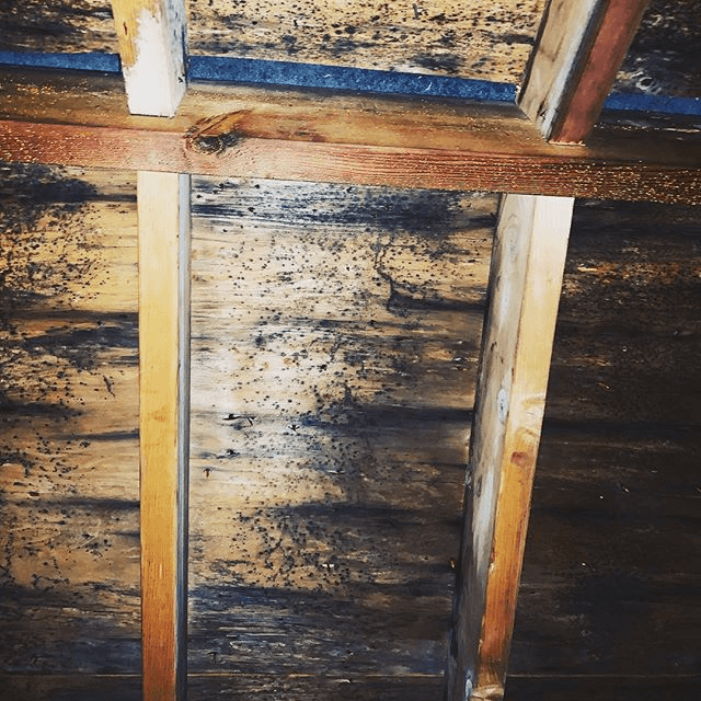 Mold removal in the attic of a home.